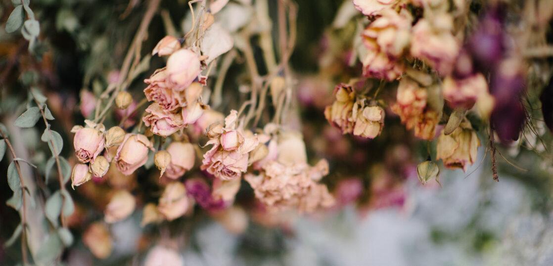 ドライフラワーの作り方2選|初心者でも失敗しない方法や材料・おすすめの花を紹介!